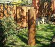 Moderner Sichtschutz Im Garten Luxus Weidenmatte Sichtschutzmatte Für Zäune & Balkongeländer