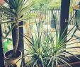 Nackt Im Garten Schön 31 Reizend Palme Wohnzimmer Frisch