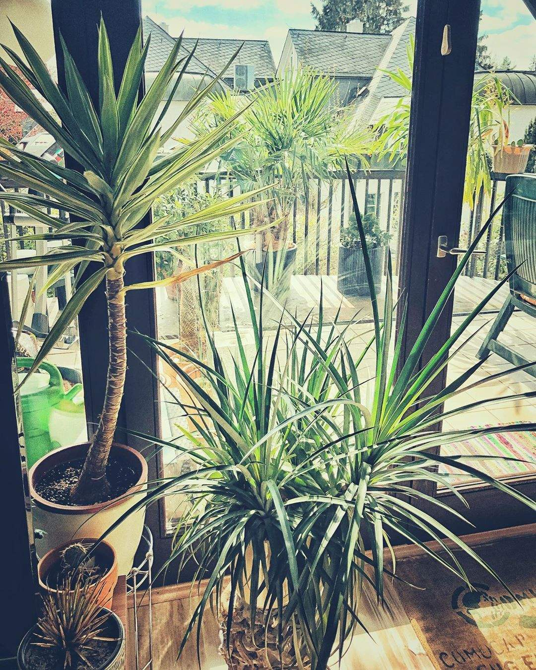 Nackt Im Garten Schön 19 Reizend Palme Wohnzimmer Frisch  Garten