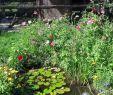 Natur Garten Luxus Gartengestaltung Gartenliebe Naturgarten Naturgartenliebe