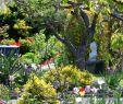 Natur Garten Reizend Individualität Auf Den Parzellen Lörrach Badische Zeitung