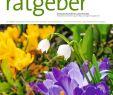 Naturnaher Garten Pflegeleicht Anlegen Das Beste Von Der Praktische Gartenratgeber 3 2019 Pages 1 14 Text