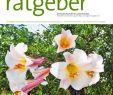Naturnaher Garten Pflegeleicht Anlegen Das Beste Von Der Praktische Gartenratgeber 7 2019 Pages 1 16 Text