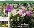 Naturnaher Garten Pflegeleicht Anlegen Genial Calaméo Mein Para S 1 2018 Schleys Bochum