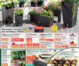 Norma24 De Aktionen Garten Und Balkon Frisch Calaméo norma Angebote 23april 27april2019