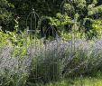 Obelisk Garten Das Beste Von Rankhilfe Barrington Obelisk 3er Set