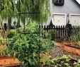 Obelisk Garten Frisch Garden Obelisk Es Round Trellis Free Standing