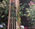 Obelisk Garten Reizend for Clematis or Mandevilla Garden Obelisk Manhattan