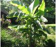 Obstkisten Deko Garten Luxus tom Garten