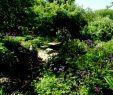 Offene Gärten Rheinhessen Elegant Majorahn Ein Garten In Rheinhessen