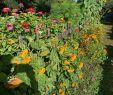 Offener Garten Das Beste Von Himmelreich Rügen Bewertungen Fotos & Preisvergleich
