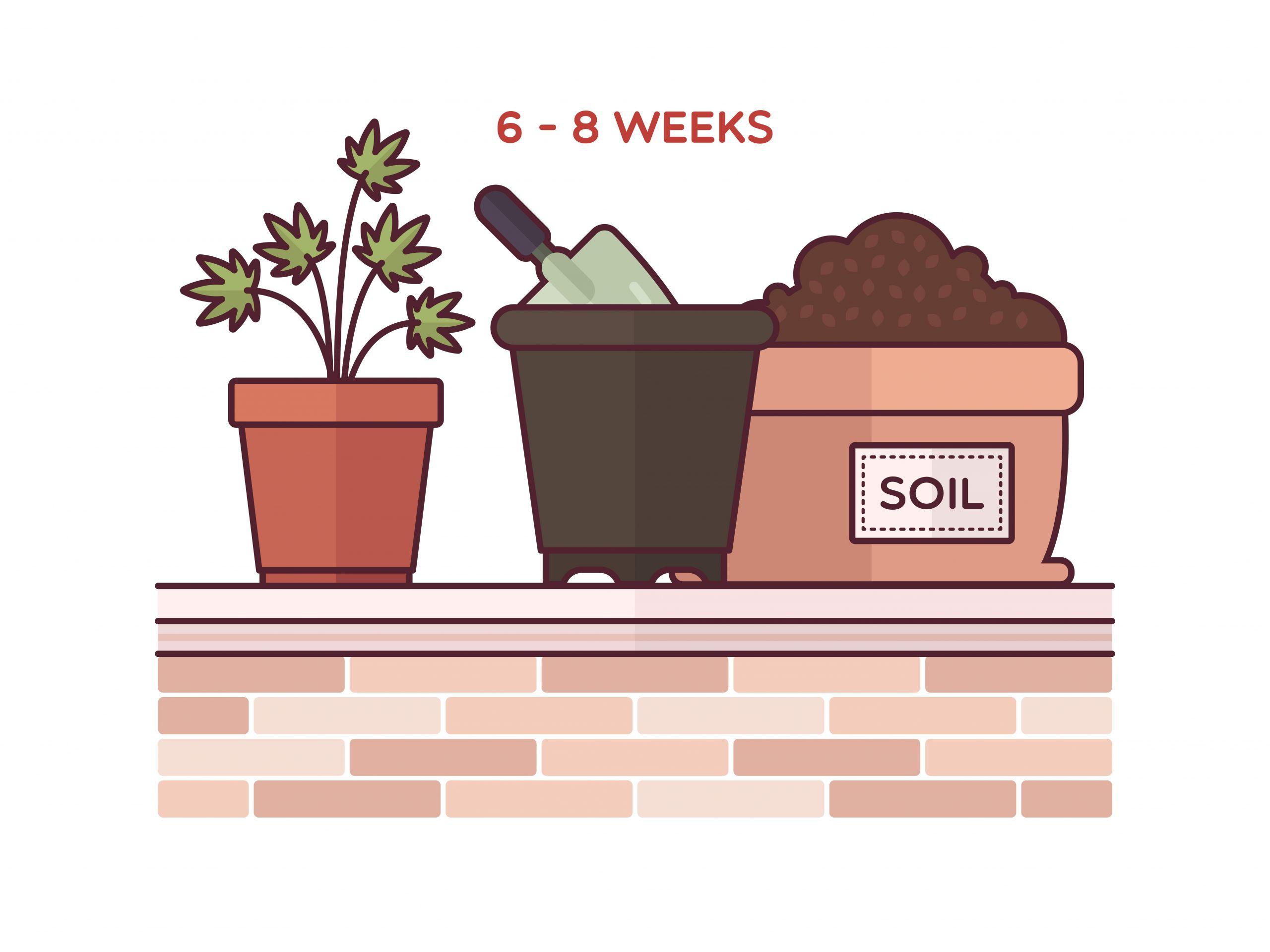 Plant Clones Step 13