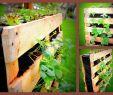 Paletten Ideen Garten Inspirierend Garten Blumen In Paletten Pflanzen & Holzpaletten Beet