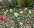 Park Der Gärten Bad Zwischenahn Genial Park Der Gärten Floraler Familienspaß In Bad Zwischenahn