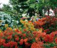 Park Der Gärten Bad Zwischenahn Inspirierend Park Der Gärten Bad Zwischenahn Aktuelle 2019 Lohnt