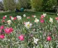 Park Der Gärten In Bad Zwischenahn Das Beste Von Park Der Gärten Bad Zwischenahn Blumen