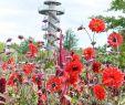 """Park Der Gärten In Bad Zwischenahn Luxus """"park Der Gärten"""" Voll Aufgeblüht In Bad Zwischenahn"""