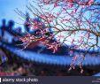 Pavillon Für Garten Luxus Ai Oi Stockfotos & Ai Oi Bilder Alamy