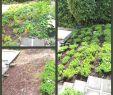 Permakultur Garten Anlegen Einzigartig Deko Garten Selber Machen — Temobardz Home Blog