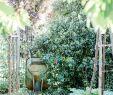 Permakultur Garten Anlegen Luxus Die 225 Besten Bilder Von Gemüsegarten Und Ernteliebelei