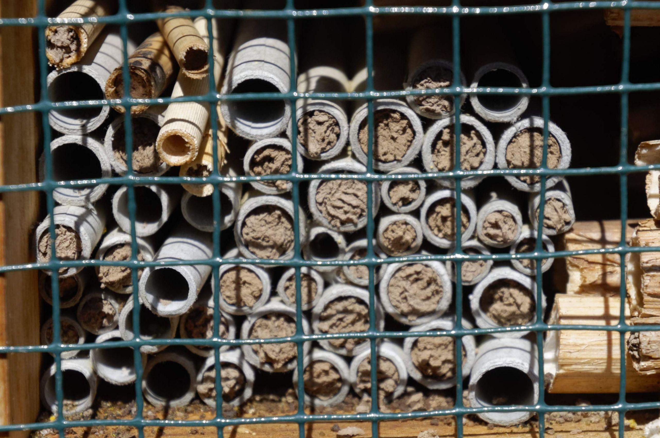 Insektenhotel aus Pappröhrchen 2017 by RaBoe 03