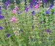 Permakultur Garten Genial Bio Saatgut Schopfsalbei