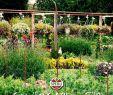 Permakultur Garten Inspirierend Pin Auf Gemüsegarten