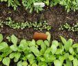 Permakultur Garten Planen Schön Gemüse Anbauen Ein Anbauplan In 7 Schritten