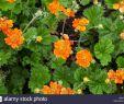 Pflanzen Für Garten Einzigartig Balb Stockfotos & Balb Bilder Alamy