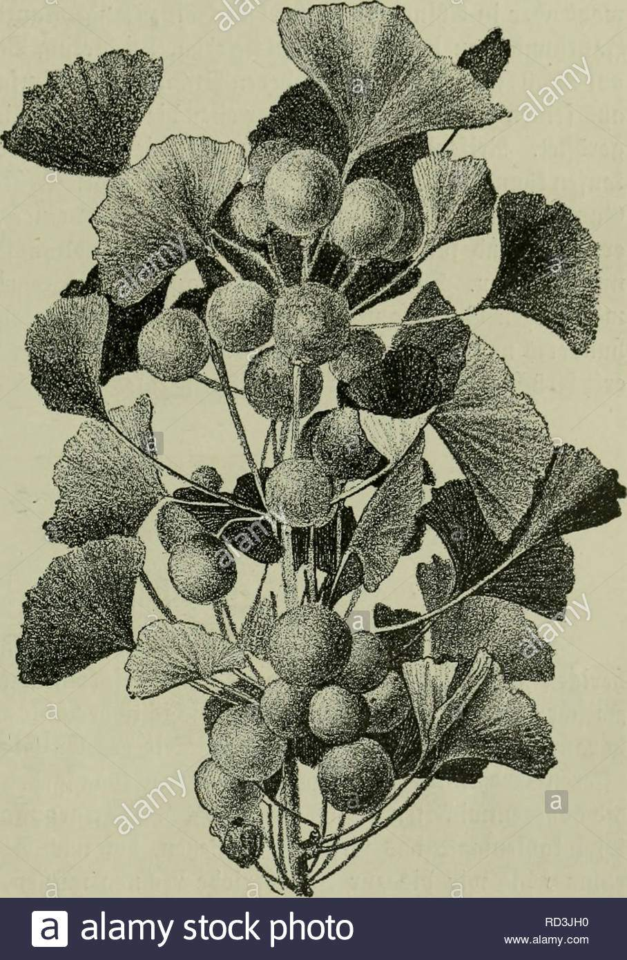 das leben der pflanze plants plants plants phytogeography ingfo 63 ein fonberbar cmif von urrteltlt=fcmbartigcn unb gewolnt pflansenaftcn erfetnungcn ift bte ugleic ein unermblicer wdmx be pflanliden 3nnen= ieben ntd t 511 uerg en tcine elcftion ferne pijfalifccemtfcen iefee er flren ha ufammcnfptel burc ba fii eine arnpalme befrutet stur irc aiel fttebtgc iecfafte elb tttigfett bie baju roaraft raffinierter witttl bebient sie an ba onb geftiegene 55ffan3e mit bcm saffer ange= pater 5efrutung bereitet fid felb RD3JH0