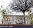 Pflanzen Für Schattigen Garten Genial Leben In Der S Stockfotos & Leben In Der S Bilder Alamy