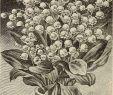 Pflanzen Für Schattigen Garten Inspirierend Lilv Stockfotos & Lilv Bilder Alamy