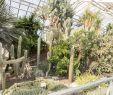 Pflanzen Im Garten Reizend File Botanischer Garten In Halle Saale Im Sukulentenhaus