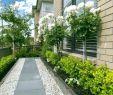 Pflegeleichte Gärten Gestalten Ideen Tipps Und Pflanzpläne Das Beste Von Kleiner Pflegeleichter Garten Pflegeleichter Garten Bilder