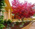Pflegeleichte Gärten Gestalten Ideen Tipps Und Pflanzpläne Das Beste Von Vorgarten Gestalten – Moderne Ideen Und Hilfreiche Tipps