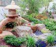 Pflegeleichte Gärten Gestalten Ideen Tipps Und Pflanzpläne Inspirierend Steingarten Anlegen 116 Gestaltungsideen Und Tipps