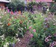 Pflegeleichte Gärten Gestalten Ideen Tipps Und Pflanzpläne Neu Garten Anlegen Ideen Anleitung Und Praxistipps