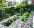 Pflegeleichte Gärten Gestalten Ideen Tipps Und Pflanzpläne Schön Vorgarten Gestalten – Moderne Ideen Und Hilfreiche Tipps