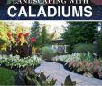 Pflegeleichter Garten Inspirierend Landschaftsgestaltung Leicht Gemacht Mit Caladiums