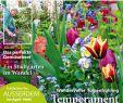 Pflegeleichter Garten Ohne Rasen Genial Cfcfcfcfecefcefy by Elcicario43 issuu