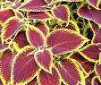 Pflegeleichter Garten Senioren Das Beste Von Pflegeleichter Garten Modern — Temobardz Home Blog