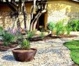 Pflegeleichter Garten Senioren Neu Pflegeleichter Garten Modern — Temobardz Home Blog