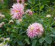 Pilze Im Garten Bestimmen Inspirierend Beiträge Von Blutkiel 123pilzforum