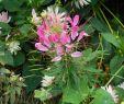 Pilze Im Garten Bestimmen Neu Beiträge Von Blutkiel 123pilzforum