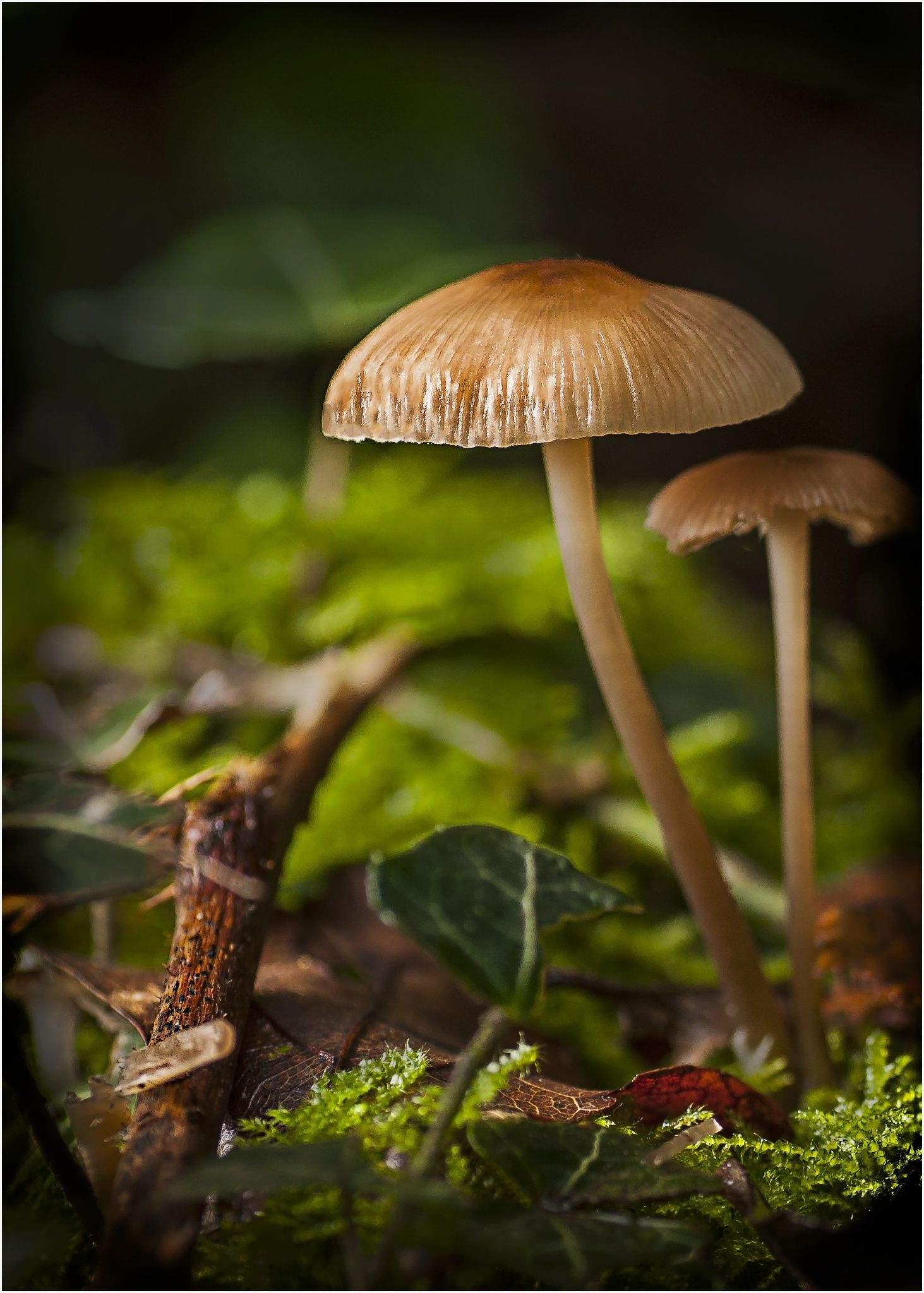 Pilze Im Garten Bilder Inspirierend ภเгคк ค๓๏