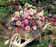 """Pinterest Garten Elegant Pin Von Bªtenabª Auf Deine """"gefällt Mir"""" Angaben Bei"""