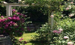 40 Reizend Pinterest Garten Neu