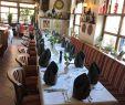 Pizza Garten Helmstedt Elegant Die 5 Besten Italienischen Restaurants In Helmstedt
