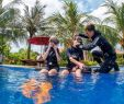Poollandschaft Garten Das Beste Von Bali Dive Resort & Spa Tauchresort