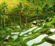 Poollandschaft Garten Reizend Hotels In Tabanan Ab 11 € Nacht Hotels Auf Kayak Suchen